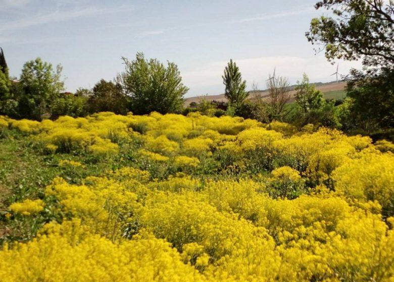 Flores pastel © Pays du Pastel-Nailloux
